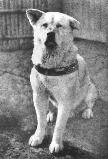 Hachikō the Dog