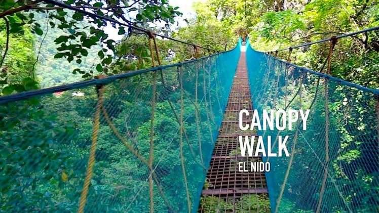 El Nido Canopy Walk