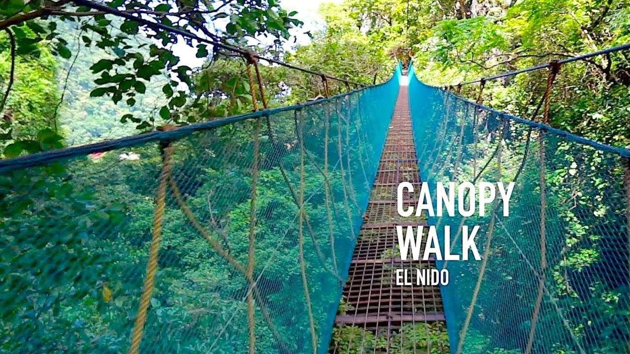 El Nido Canopy Walk Joejourneys
